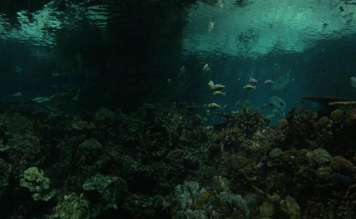 Life Vest Ocean (A ShortStory)