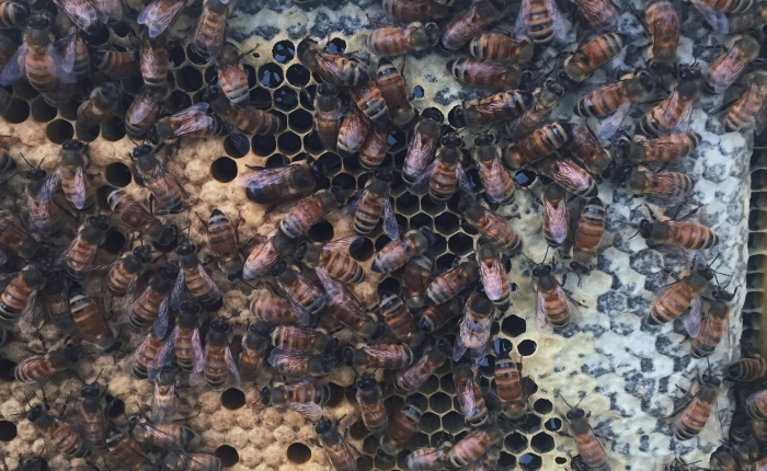 Don't Fear: More than Bee Stings andHoney